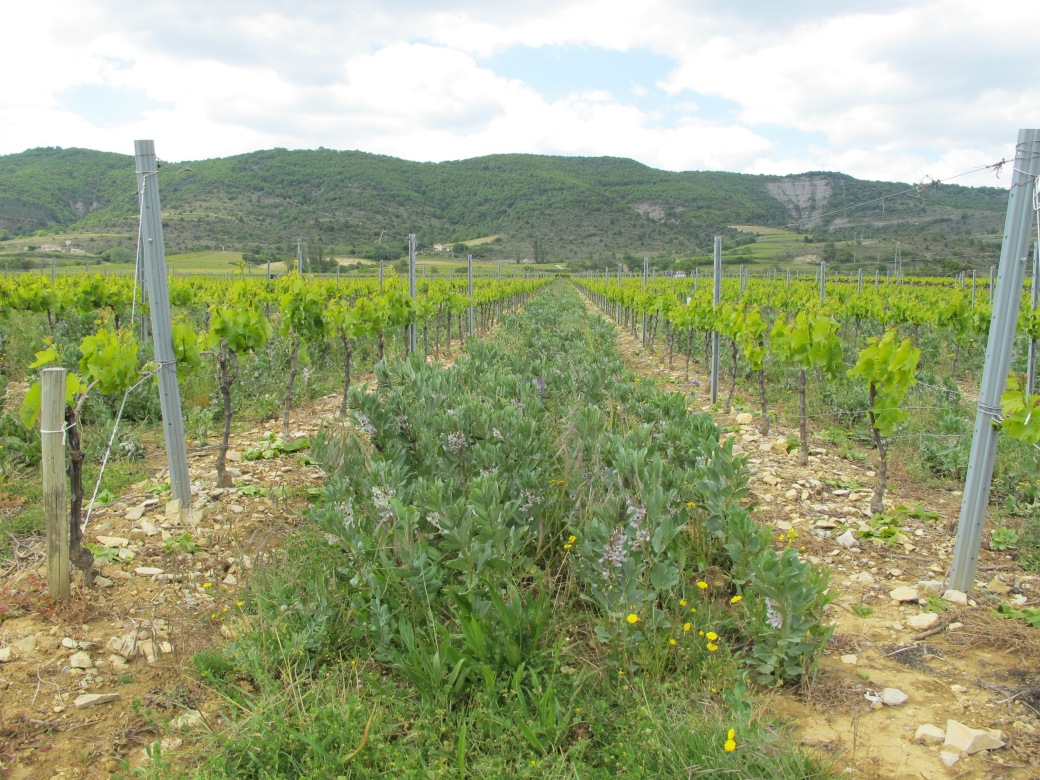 Vignes Valvignères