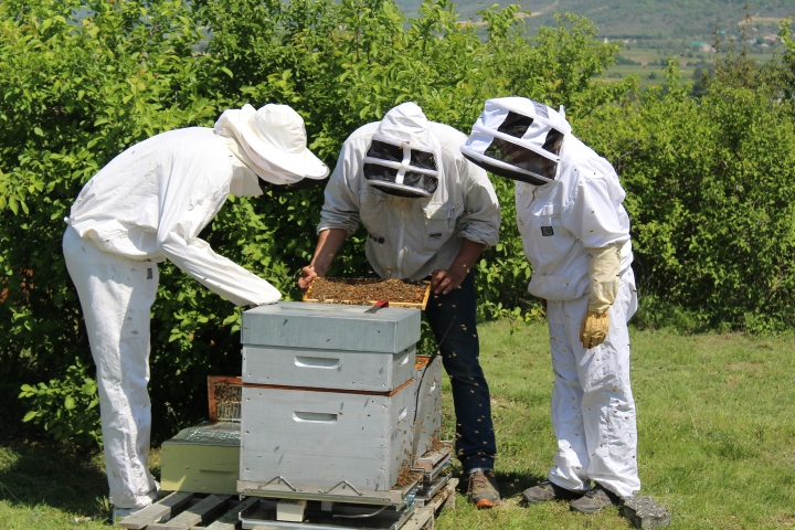 Installation des ruches connectées à Alba La Romaine